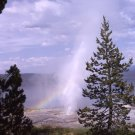 Yellowstone National Park Lone Pine Geyser 11x14 Photograph