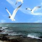 Seaguls rock