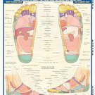 Reflexology Laminated Reference Guide by Barcharts Inc and Vince Perez (2005,...