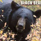 Black Bears 2012 Calendar by Willow Creek Press (2011, Calendar)