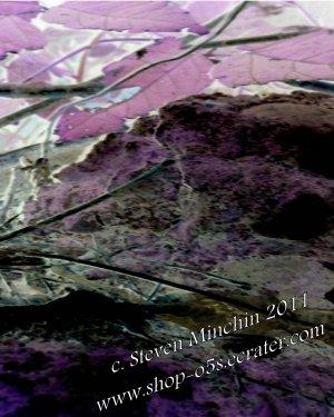 Negative Bloom #43