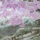 Negative Bloom #3