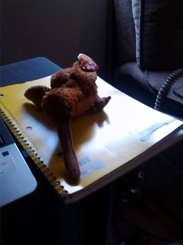 Ty Stuffed Animal Brown Bird