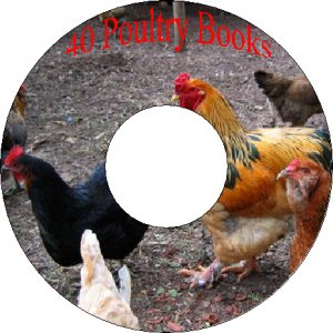 40 Vintage Books How to Build Poultry & Chicken Coops, Raise Hens, Produce Eggs