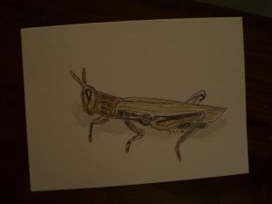 Handmade Blank  Card grasshopper watercolor