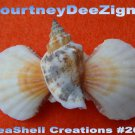 Scallop Seashell French Barrette #260 Handmade Hair, Shirt or Scarf Clip