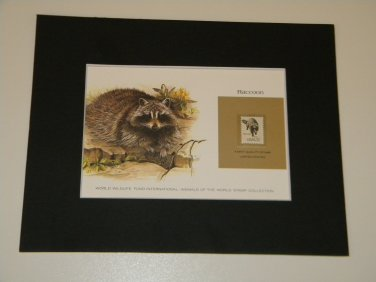 Matted Print and Stamp - Raccon - World Wildlife Fund