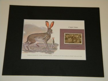 Matted Print and Stamp - Cape Hare - World Wildlife Fund