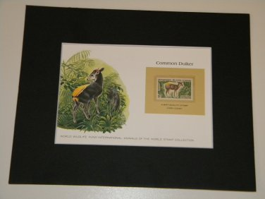 Matted Print and Stamp - Common Duiker - World Wildlife Fund