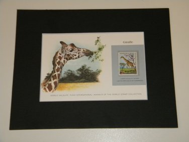 Matted Print and Stamp - Giraffe- World Wildlife Fund