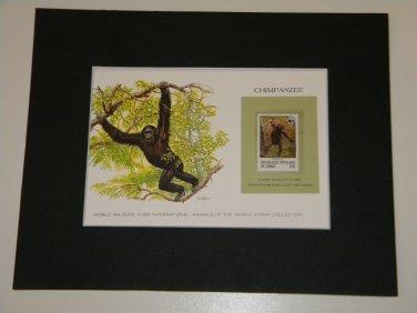 Matted Print and Stamp - Chimpanzee - World Wildlife Fund