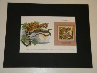 Matted Print and Stamp - Genet - World Wildlife Fund