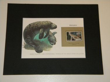 Matted Print and Stamp - Manatee - World Wildlife Fund
