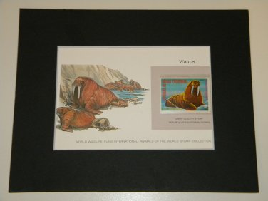 Matted Print and Stamp - Walrus - World Wildlife Fund