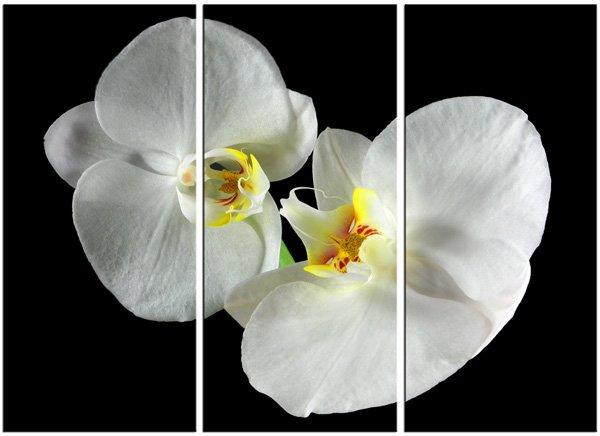 Modern flower oil paintings on Canvas flower 070