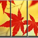Modern flower oil paintings on Canvas maple leaf 198