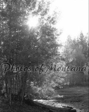 8x10 Photo ~ Black & White #004 Sun shining through the trees