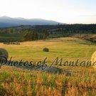 5x7 Photo ~ Scenic #002 Hayfield in Montana