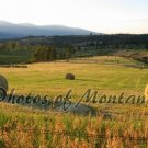 4x6 Photo ~ Scenic #002 Hayfield in Montana