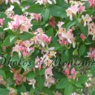 5x7 Photo ~ Flowers #006 flowering bush - pink flowers