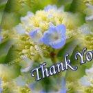 Macro Blue Hydrangea Flower Digital File Thank You