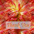 Macro Red Dahlia Flower Digital File Thank You