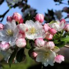 Spring Blossoms Digital Flower Photo 5x7