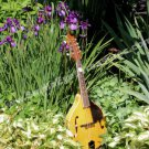 Mandolin In Flower Garden Digital Nature Photo 5x7