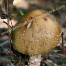 Wild Brown Mushroom Digital Nature Photo 5x7