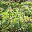 Fiddlehead Ferns And Flowers Digital Flower Photo 5x7