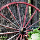 Old Red Wagon Wheel In Garden Digital Nature Photo 5x7