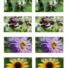 Assorted Bees And Flowers No. 1 Printable Gift Tags