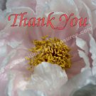 Macro Pink Peony Flower Printable Thank You Card