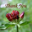 Macro Red Gentian Flower Printable Thank You Card