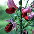 Laughing Pink Flower Digital File Flower Photo 5x7