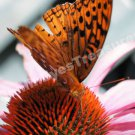 Macro Butterfly On Flower Digital File Nature Photo 5x7