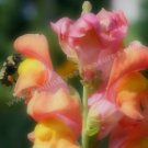 Bees On Snapdragon Digital Printable Flower Photo 5x7