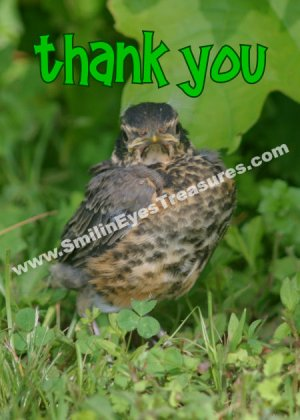 Cute Baby Robin Fledgling Animal Printable Thank You