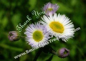 White Fleabane Daisies Flower Printable Thank You Card