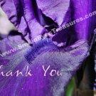 Macro Purple Iris Petal Flower Printable Thank You Card