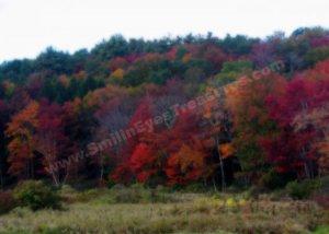 Autumn Foliage Digital Printable Nature Photo 5x7