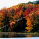 Autumn Foliage Pond Digital Printable Nature Photo 5x7