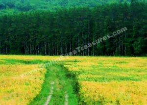 Field Of Yellow Flowers Digital Printable Photo Painting 5x7