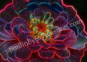 Electric Zinnia Digital Printable Flower Photo 5x7