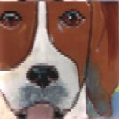 Beagle Portait Tile