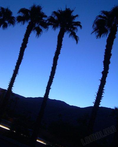 Desert Palms - Palm Desert, CA - 8x10 - Original Fine Art Photograph - FREE SHIPPING
