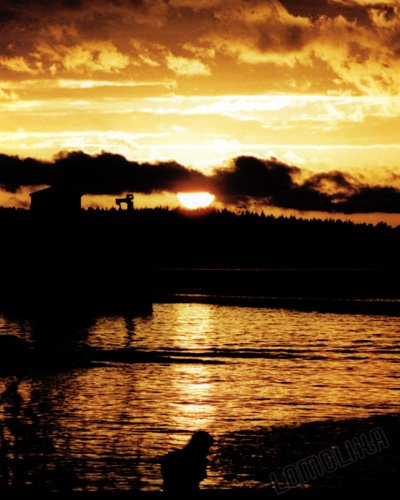 Sunrise - Guemes Island, WA - 8x10 - Original Fine Art Photograph - FREE SHIPPING