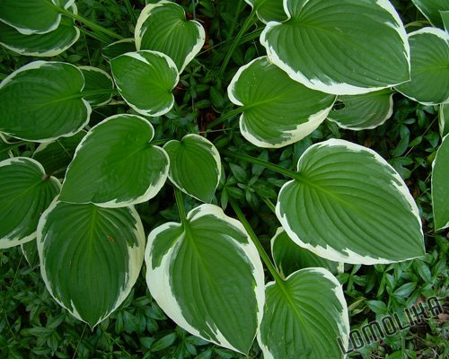 Leaves - Anacortes, WA - 8x10 - Original Fine Art Photograph - FREE SHIPPING