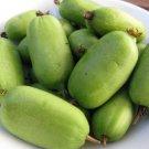 15+ Actinidia Arguta ( Hardy kiwi ) seeds