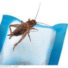 R-Zilla Cricket Water Pillows - 6 pk
